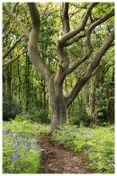 SKELETAL - Lepton Woods