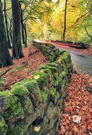 xx wood lane storthes hall