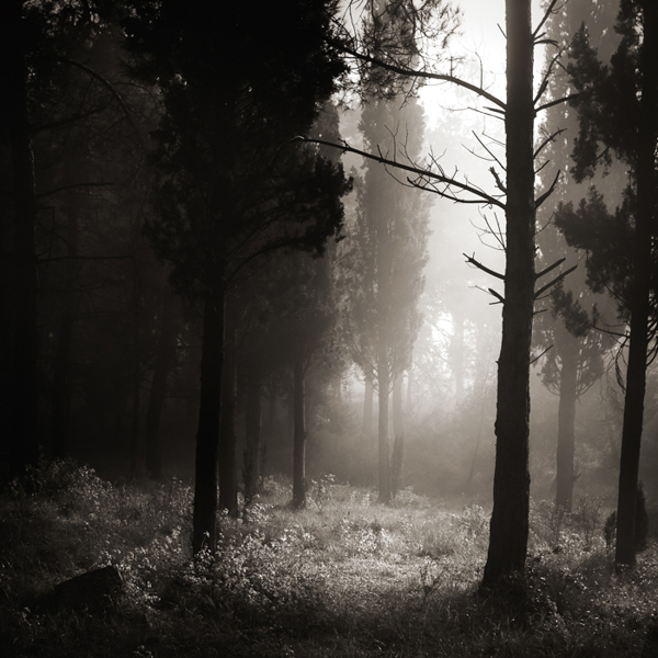 Light in the forest #13