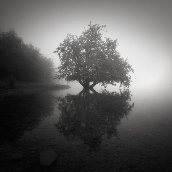 Foggy morning #3