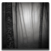 Forest tales