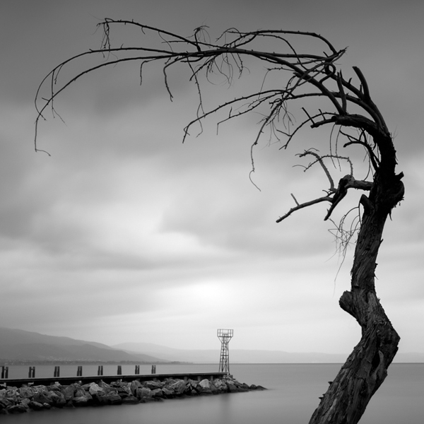 Pier and tree