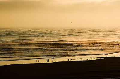 Bronzed Dawn