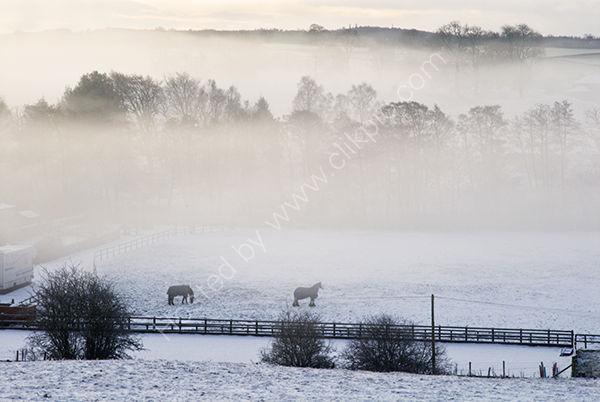 Misty Snowy Morning