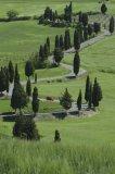 Lombardio