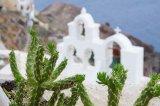 Church and Cactus