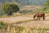 Horse at Khamsum Yuelling