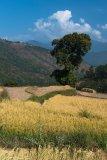 Lush Bhutan