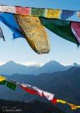 Prayer Flags at Chelela Pass