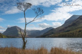 Dead Tree at Buttermere