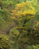 Steps at Aira Force
