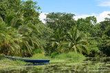 Tropical Scene at Sloth Sanctuary
