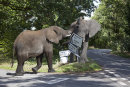 An Elephant argument