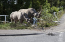No match for a Rhino