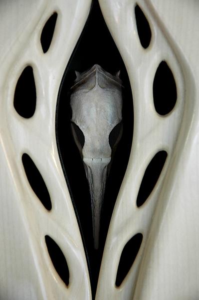 Bird Cabinet [detail]
