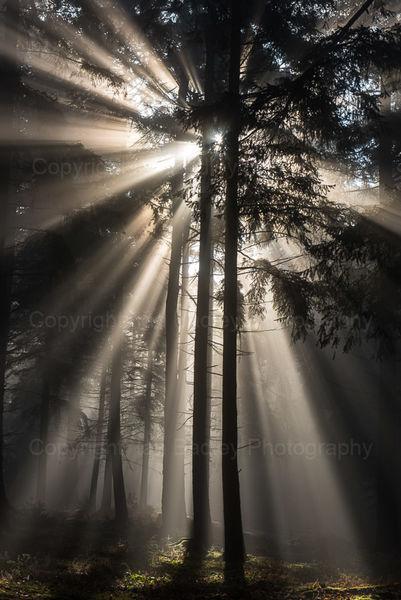 High Sunburst