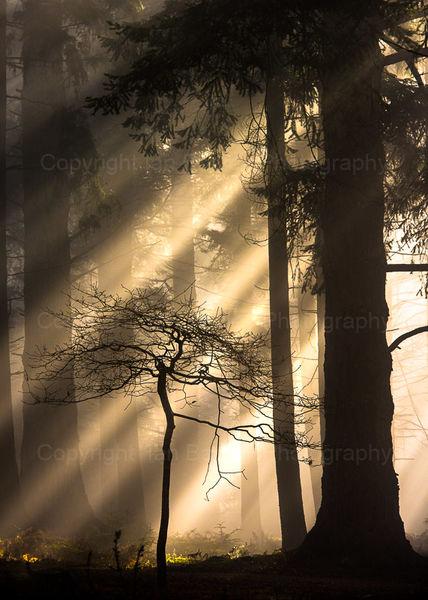 Sunrays on tree