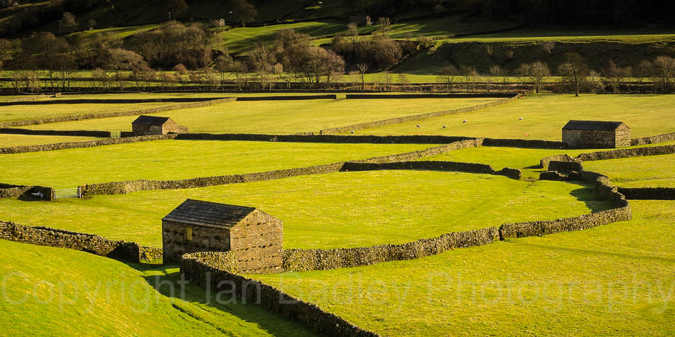 Stone walls and barns on verdent green Swaledale fields, Yorkshire, England