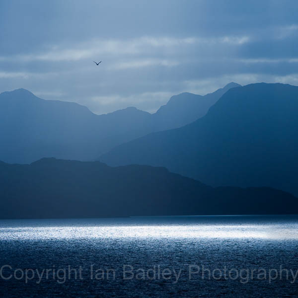 Seagull flies over Loch Torridon, Applecross, Scotland