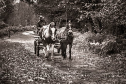 191 - Pony and trap in New Forest National Park, Hampshire, England