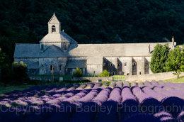Abbaye de Senanque with lavender, Vaucluse, France