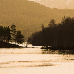 Backlit trees on a Loch in the Highlands of Scotland