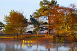 3300b - Late afternoon autumn sunlight over Hatchet Pond, Beaulieu, in the New Forest National Park, Hampshire, England