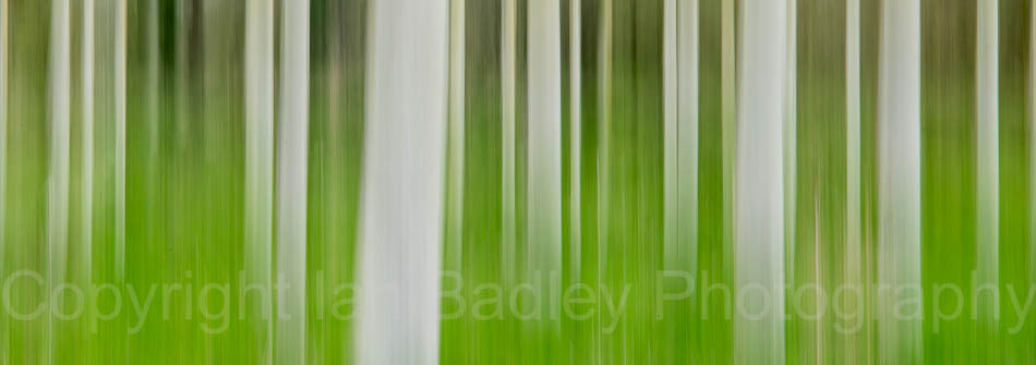 Abstract trees in Brittany, France