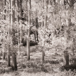 Monochrome trees in Brittany, France