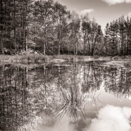 Late autumn pnd reflections, New Forest National Park, Hampshire, England