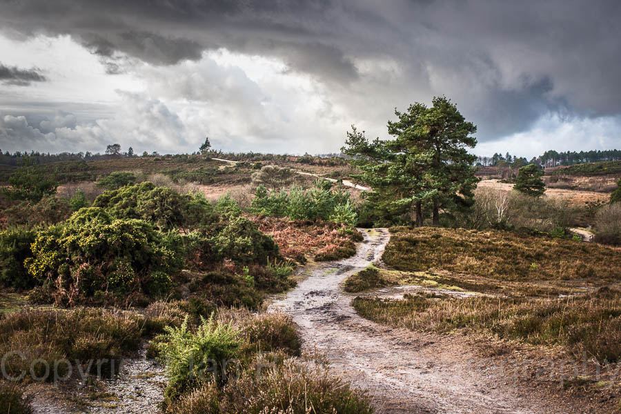 4 - Dark clouds over the New Forest National Park, Hampshire, England