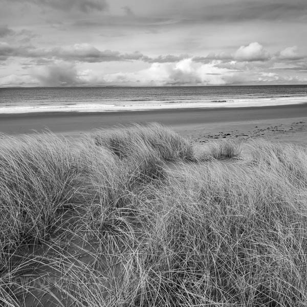 Sand dune grasses on Red Point beach, North west Scotland