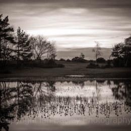 New Forest, Hampshire, UK, Hatchet Pond at Dusk