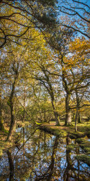 New Forest, Hampshire, UK, Autumn Stream Reflections