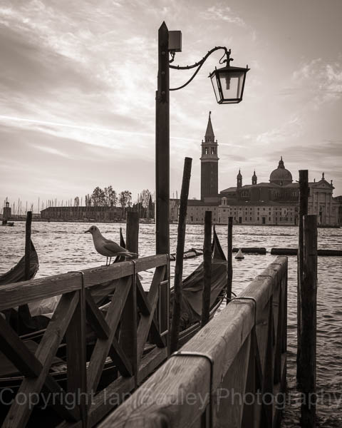 Italy, Venice, The seagull and gondola
