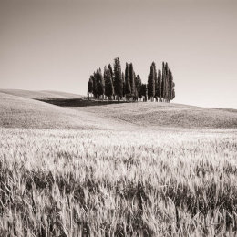 Cypress trees and hills in Tuscany, Italy