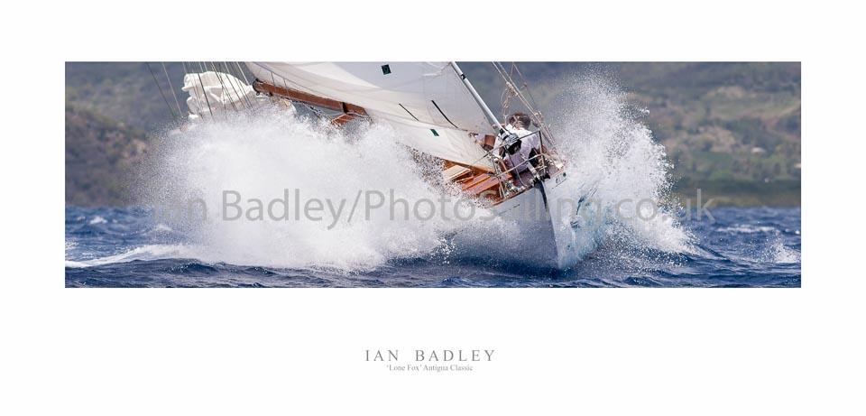 Lone Fox racing in the Antigua Classic