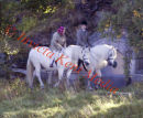 PICS SHOWS; Balmoral,   Today  The Queen takes a ride in the Balmoral Sunshine Temps reaching 20 C