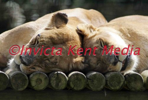 PIC SHOWS<br>