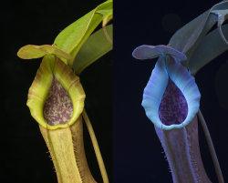 Ultraviolet Fluorescence Imaging