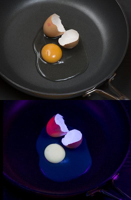 Hens egg in visible light, and fluorescing in UV light.