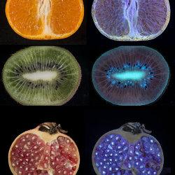 Fruit fluorescing in UV radiation (365nm)