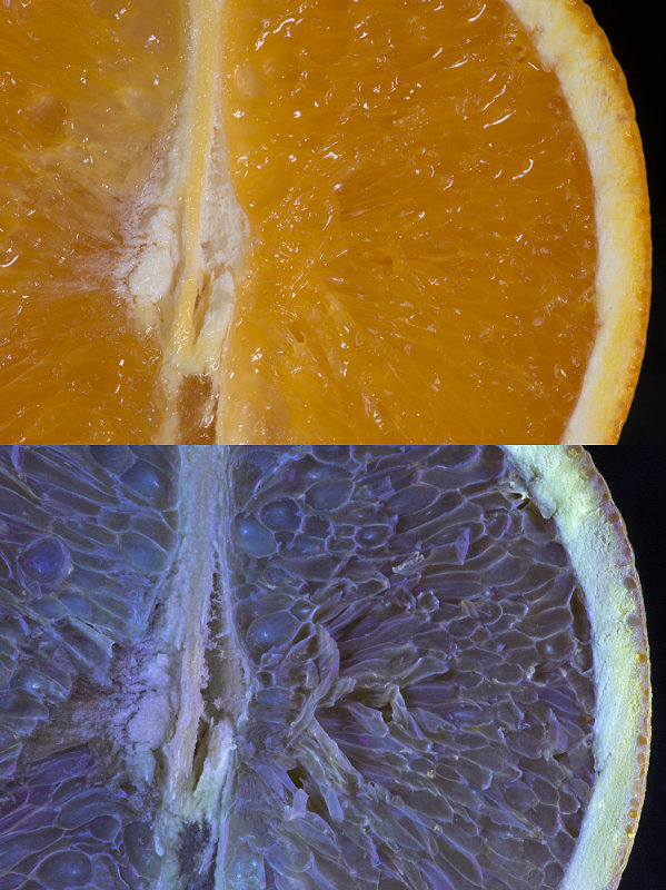 Orange in visible light and UV fluorescence