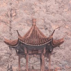 "Japanese style seat, botanic garden, Surrey, England. False colour infrared image (590nm ""Goldie"" filter"""