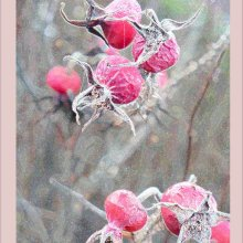 20 AngelaMulligan Frosted Seedpods M1