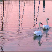 AngelaMulligan Swanning around at sunset M6