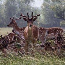 Anne Dziedzicki Deer NW