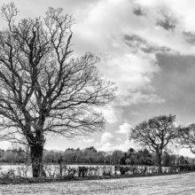 Carol Walker Winter Landscape M4