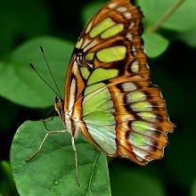 Melvyn Wall Butterfly3 M3