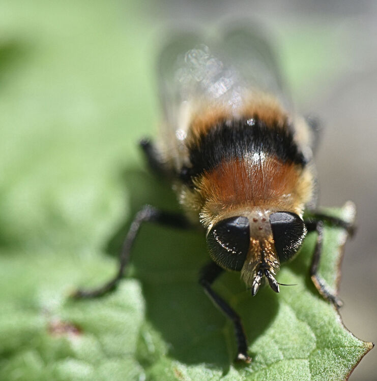 Melvyn Wall Honey Bee3 St.H